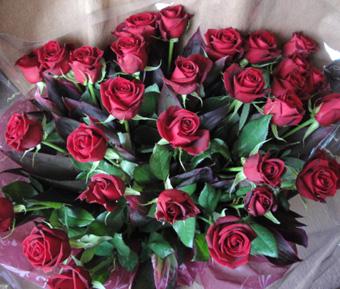 rose-1110_1.jpg