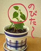 midori2.jpg